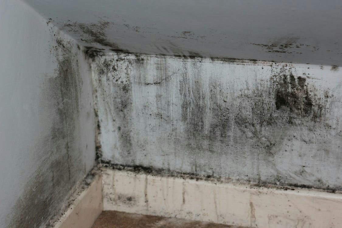 How to Identify Mold and When to Hire a Mold Removal Specialist